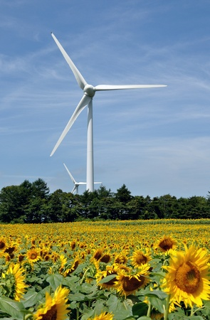 plateau of flowers: wind power generation Stock Photo