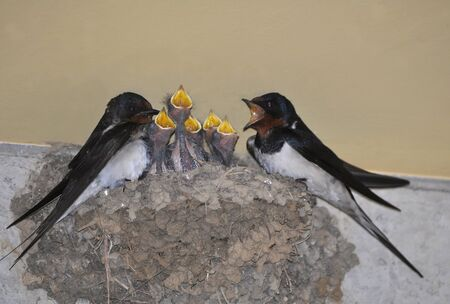 swallows photo