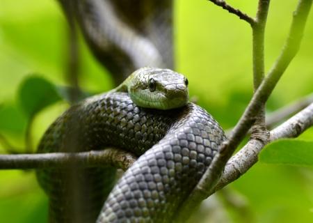blue-green snake