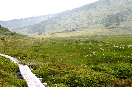 wood road and marshland