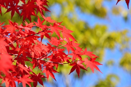 autumn leaves Stock Photo - 22013812