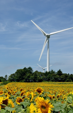 plateau of flowers: Wind turbine