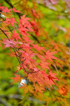 autumn leaves Stock Photo - 23475696