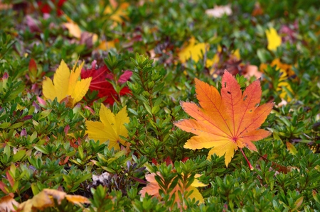 fallen leaves Stock Photo - 23855220