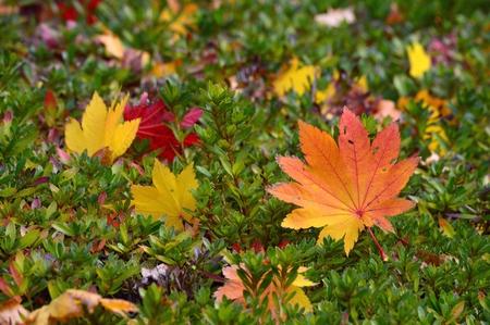 fallen leaves Stock Photo - 23855220