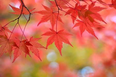 autumn leaves Stock Photo - 23864450