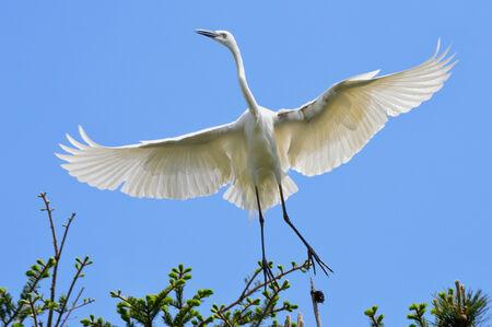 egret: egret