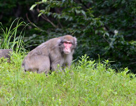 a monkey Stock Photo