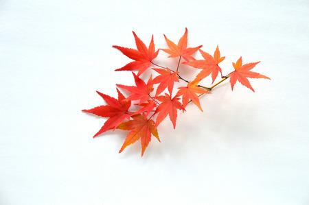 秋の紅葉 写真素材