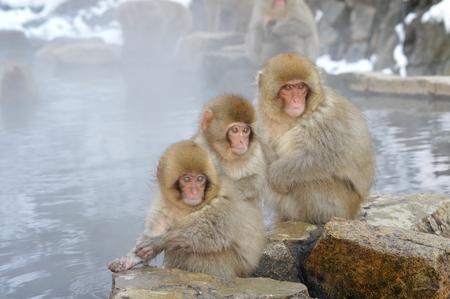 野生の猿や温泉