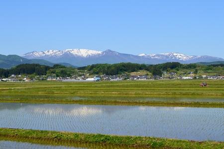 春の田んぼと山座のフィールド