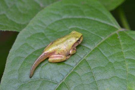 living organisms: Frog Stock Photo