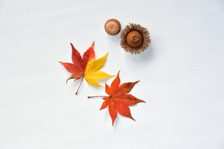 Acorn and Maple Imagens