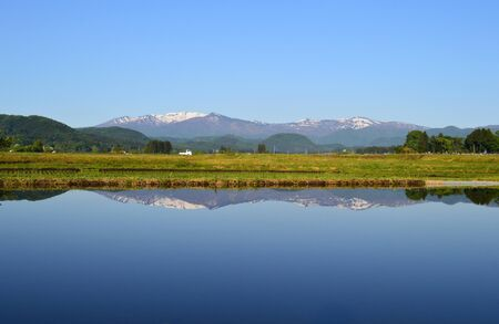 Mount zao in paddy field in spring