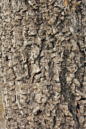 full frame: Bark Tree texture background full frame in nature Stock Photo