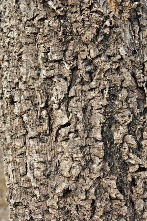 Bark Tree texture background full frame in nature Archivio Fotografico