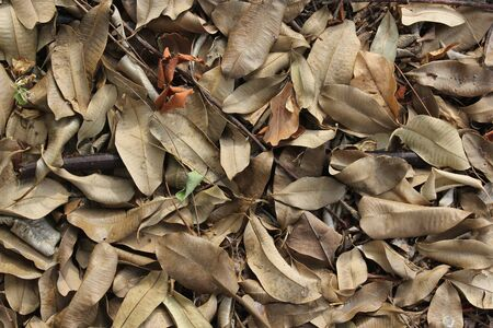 Brown fallen dry leaves laying on the ground photo