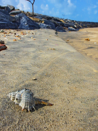 Big seashell on the sand on the beach Archivio Fotografico