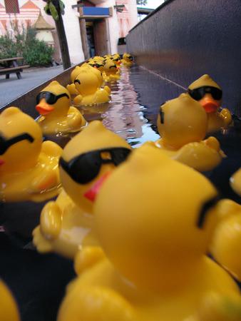 drove: drove of sun glasses rubber duck