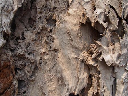 drywood: termite damage old rotten tree