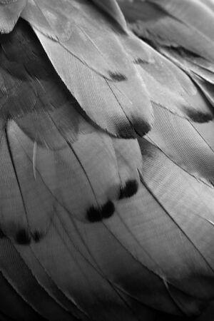 plumes noir et blanc, texture ara plumes de fond