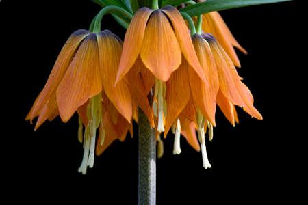 bell flower Stock Photo
