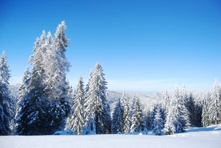 snowy mountain forest  Stock Photo - 9751856