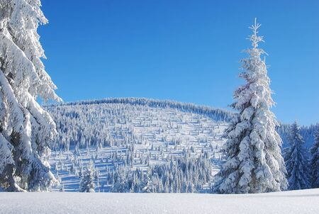 snowy mountain forest photo