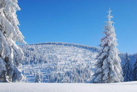 snowy mountain forest Standard-Bild
