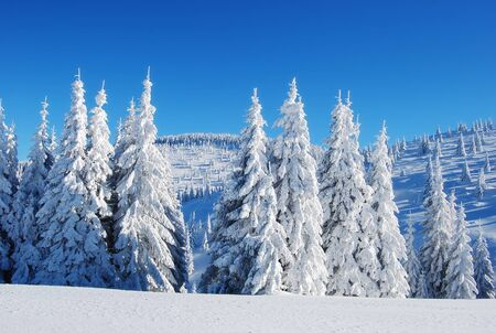 snowy mountain forest Stock Photo