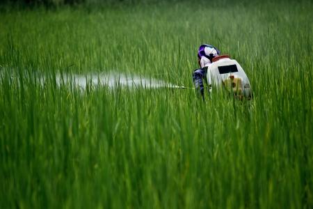 fertilizing: Farmer fertilizing