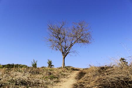 huge tree: The huge old oak tree alone among the green meadows
