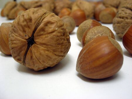 Close-up of a walnut and a hazel nut surronded by some other nuts.