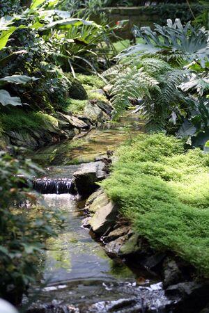 Artificial stream in a botanic garden.