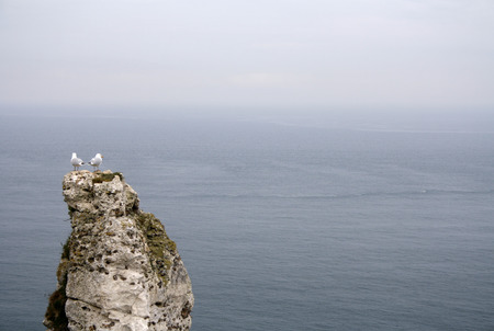 A pair of seagulls on a rock in Brittany looking at the Brittish Channel  Stock Photo