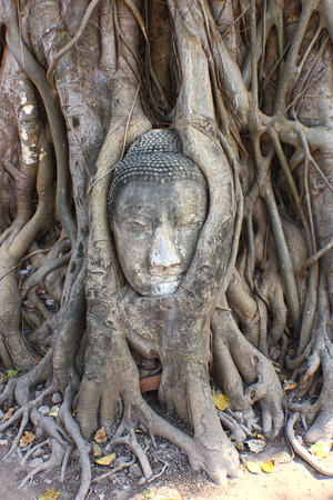 Head of Sandstone Buddha in The Tree Roots at Wat Mahathat Ayutthaya Thailand photo