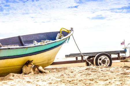 hua hin: dog sleep on  hua hin beach Thailand