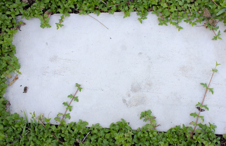 climbing frames: ivy leaves on  brick floor Stock Photo