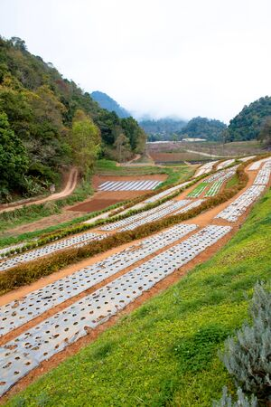 Cultivation on the mountains in Thailand photo