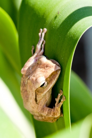 frog sitting on green  background