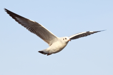 The bird flying in a blue sky