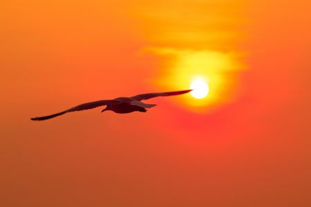 seagull with sunset in the background Stock Photo - 17990535