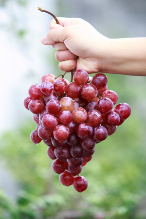 factions: Fresh red grapes