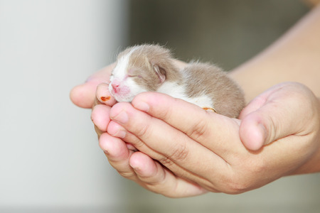 preceded: Newborn little kitten on the hand Stock Photo
