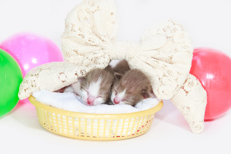 preceded: Newborn sleeping baby cat on isolated