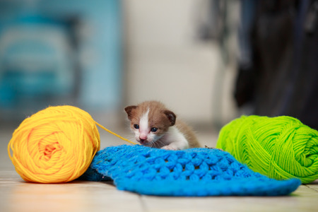 preceded: Cute little kitten playing of yarn on the tiles. Stock Photo