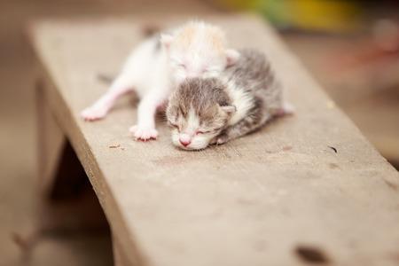 Two kittens sleeping on wood Foto de archivo