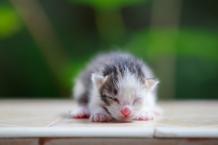 Close up of newborn kitten Stockfoto