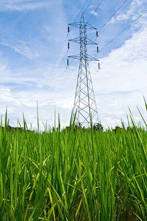 Lush green rice field photo