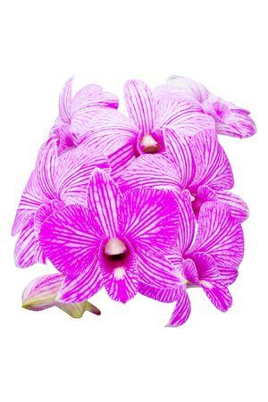 carpel: Beautiful orchid